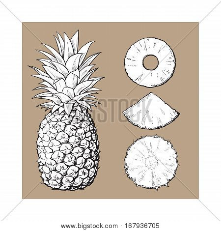 Whole pineapple and three types of slices - round peeled, unpeeled, wedge, sketch style vector illustration isolated on brown background. Realistic hand drawing of whole and sliced pineapple