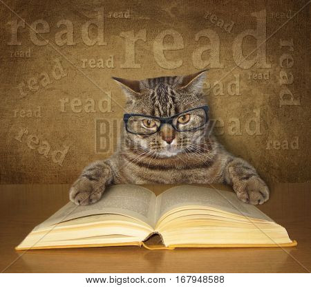 The clever cat with glasses sits at a table and reads a book.