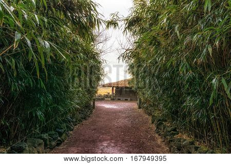 a traditional thatched roof house among the bamboo forest. Jeju stone park South Korea