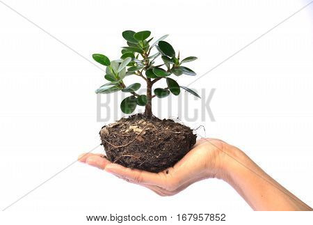 Hand of person holding tree on white background isolate