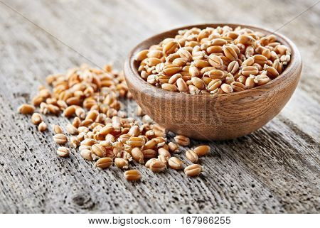 Wheat sprout in a wooden plate