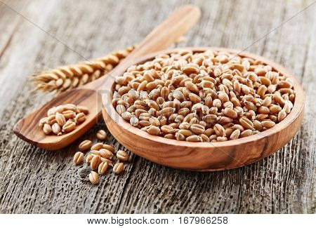 Wheat sprout with ear on a wooden background