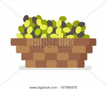 Wooden basket with olives isolated on white background. Spain festival of olives concept. Olive oil making concept in flat style design. Olive harvest. Gathered olives. Vector illustration