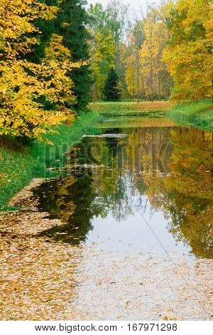 Autumn Pond In The Park Strewn With Yellow Leaves