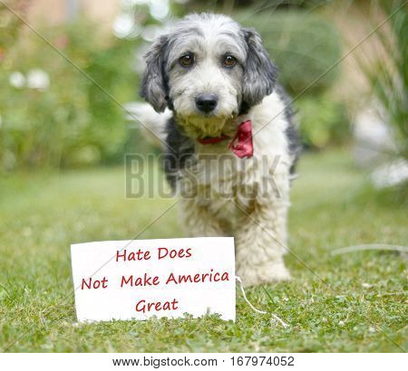 The cute black and white adopted dog and paper with text hate does not make america great