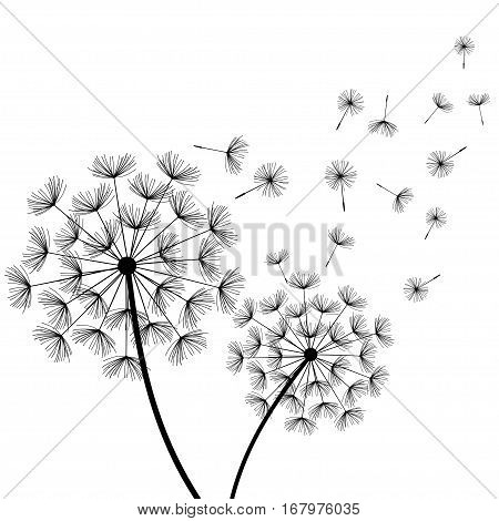 Beautiful nature white background with black dandelions and flying fluff. Floral stylish trendy wallpaper with summer or spring flowers. Modern backdrop. Vector illustration