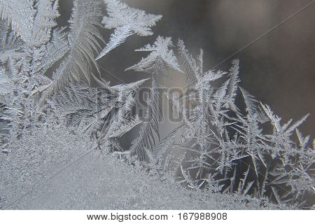 the a frost patterns on winter glass