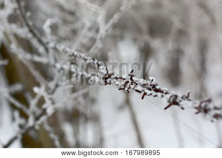 Close-up Of Barbed Wire In Winter With Snow