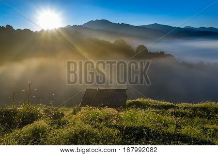 Small Hut In Tea Field With Sunlight, Mist And Blue Sky