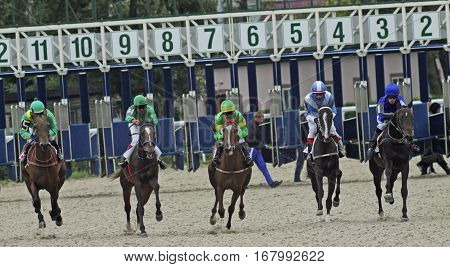 PYATIGORSK,RUSSIA - OCTOBER 3,2010:Start horse race for the traditional prize Salamova - the oldest and the largest racecourse in Russia,on October 3,2010 in Pyatigorsk,Northern Caucasus,Russia.