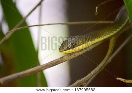 Green snake head on a branch in a park in Mombasa Kenya