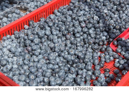 A lot of blueberries in a red plastic box