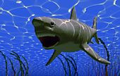 the white big shark jaws (3D rendering) poster