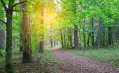 Country road in beautifull wild forest covert. Nature trees in forest. poster