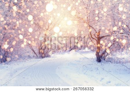 Winter Wonderland. Park Covered By Snow. Snowy Footpath In Park With Frosty Trees Illuminated By Chr