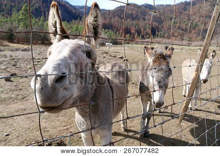 Friendly Donkeys At A Ranch In Durango, Co