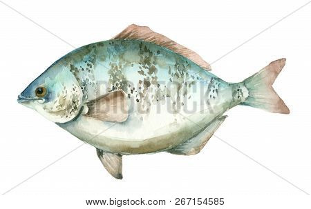 Hand Drawn Watercolor Sea Fish On White Background. Realistic Watercolor Fish.
