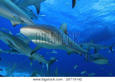 Sharks with dive boat in background