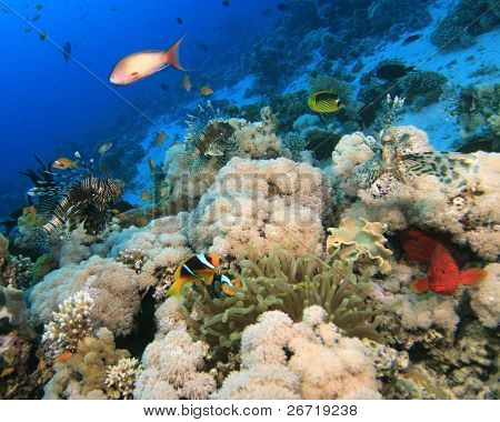 Scene of healthy coral reef