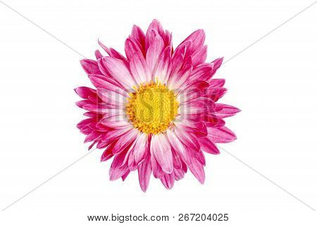 Closeup Of Daisy Flower Isolated On White