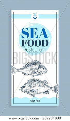 Bass Or Bream Marine Creature As Seafood Sketch Style Flat Vector Illustration. Nautical Information