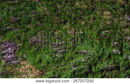 Moss Green Grunge  Texture. Moss Background. Green Moss On Grunge Texture, Background