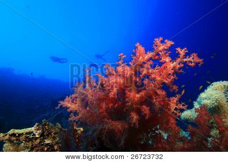 Colorful Soft Coral with Scuba Divers silhouetted in background