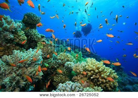 Scuba Diving on Coral Reef poster