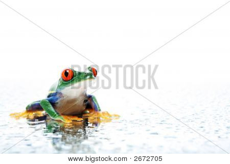Frog With Water Droplets