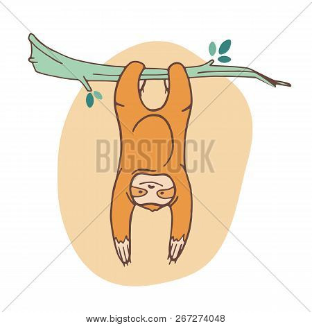 Adorable Sloth Clinging To Branch And Hanging. Joyful Wild Exotic Animal Playing On Tropical Tree. C