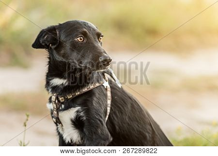 non-pedigree dog on the grass in a summer day