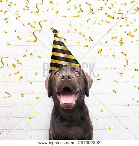 Happy Birthday Card Crazy Dog With Party Hat Is Smiling In De Camera Agianst White Brick Background