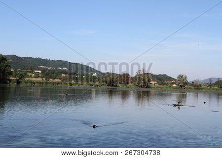 The Folaga In The Reserve Of Lago Di Posta Fibreno