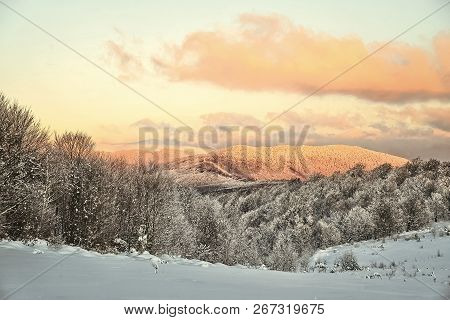 Beautiful Winter White Snowy Frosty Frozen Cold Landscape With Snow On Tree Branches In Forest On Hi