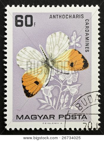 HUNGARY - CIRCA 1959: a stamp printed in Hungary shows illustration of Orange Tip - Anthocharis Cardamines - a common butterfly found in Europe and Asia. Hungary, circa 1959