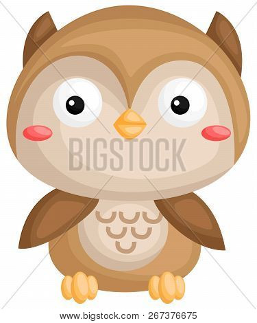 A Vector Of A Cute Owl Looking At You