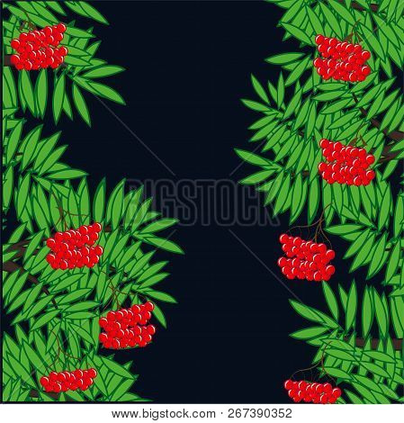 Branches Of Ripe Rowanberry On Dark Background