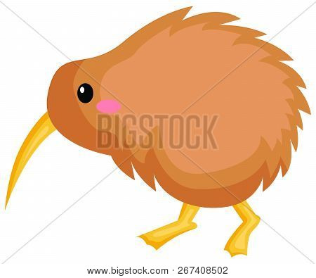 A Vector Of A Cute Kiwi Bird
