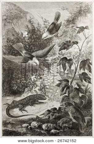 Reptil and birds of Galapagos islands. Created by Rouyer and Huyol after atlas of Beagle, published on Le Tour du Monde, Paris, 1860