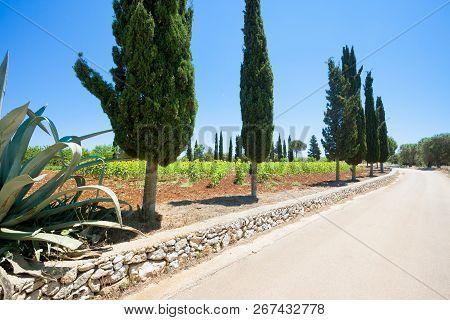 Santa Cesarea Terme, Apulia, Italy - On The Country Road Towards Santa Cesarea Terme