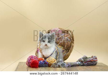 Cute Fluffy Cat Is Playing With Ball Of Knitting.