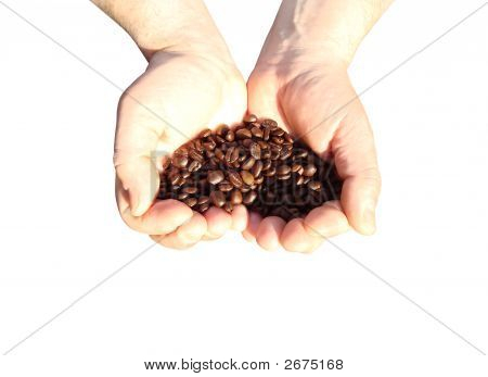 Hands Full Of Coffee