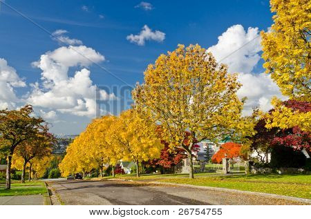 Row of yellow trees at street in Vancouver, Canada.