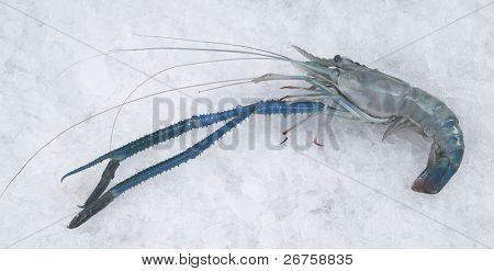 fresh prawn poster