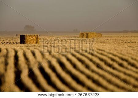 Hay Bales And Rows Harvest In Saskatchewan Canada