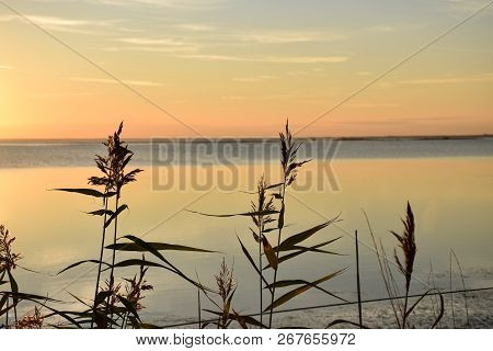 Reeds Close Up At Sunset By Calm Water