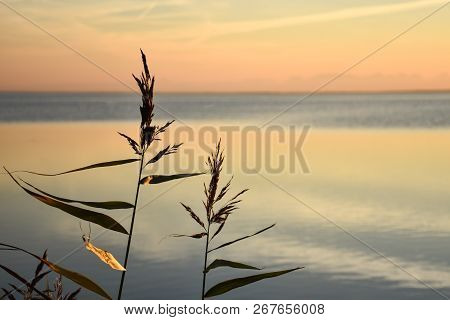 Clorful Sky With Reeds Close Up By Calm Water