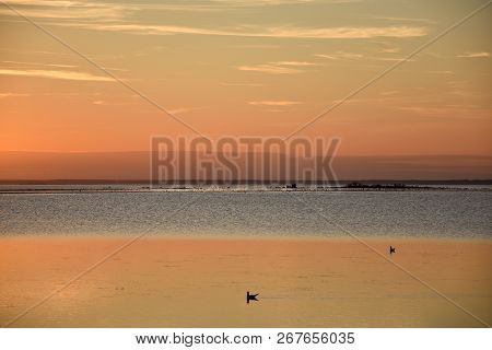 Seagulls Swimming In Calm Water By Sunset