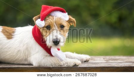 Cute Christmas Pet Dog Puppy With Santa Claus Hat - Greeting Card, Web Banner Idea