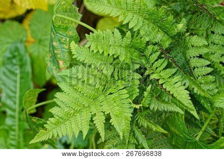 Green Natural Texture Of Fern Leaves In The Forest